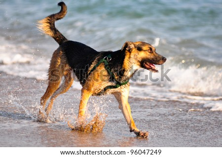 Happy dog playing at the beach - stock photo