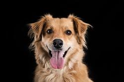 Happy Dog Portrait black background