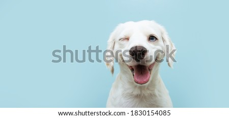Happy dog puppy winking an eye and smiling  on colored blue backgorund with closed eyes.