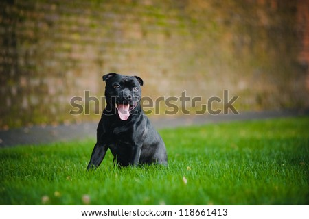 happy dog Terrier sitting sitting on grass