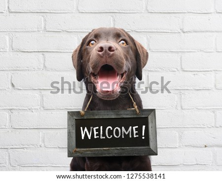 Happy dog with chalkboard with welcome text says hello welcome we're open against white brick outdoor wall Сток-фото ©
