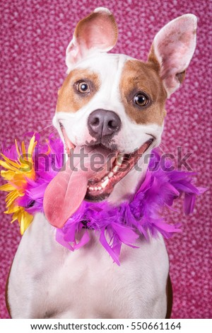 Happy dog with flowers #550661164