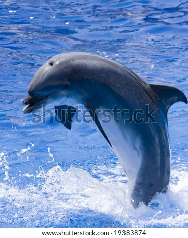 Happy dolphin is jumping out of the water
