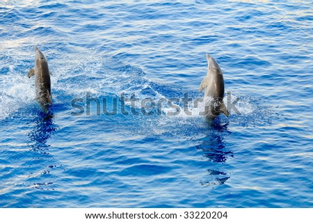 happy dolphins jumping out of the water