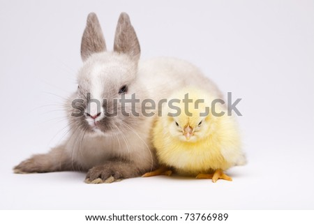 Happy Easter animal, Rabbit on chick