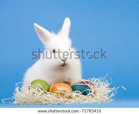 Happy Easter - baby rabbit and easter eggs