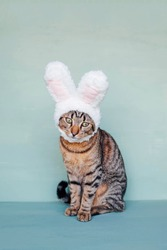 Happy Easter. European Shorthair young cat wearing funny bunny ears against pastel green background. Mackerel tabby kitty dressed as rabbit, close up. Space for text.