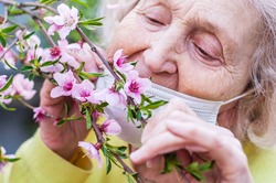 Happy elderly woman in a protective respiratory mask sniffs a branch of a blossoming pink peach tree. Quarantine, health, precautions. Coronavirus covid19. Spring enjoyment. Enjoyment of life. Values