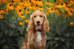 happy english cocker spaniel puppy portrait with blooming flowers in the background