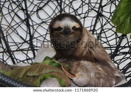 Happy face sloth