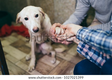 Happy family at animal shelter choosing a dog for adoption. - Shutterstock ID 1027021399