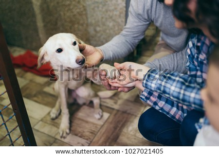 Happy family at animal shelter choosing a dog for adoption. - Shutterstock ID 1027021405