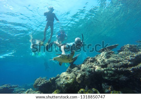Happy family - man in snorkeling mask dive underwater with tropical fishes and turtle in coral reef sea pool. Travel lifestyle, water sport outdoor adventure, swimming lessons on summer beach  #1318850747