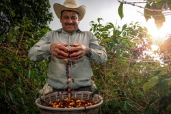 Happy farmer showing off his freshly cut coffee beans.