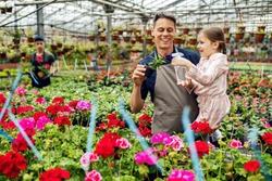 Happy father and daughter nourishing potted flowers and watering them in a greenhouse.
