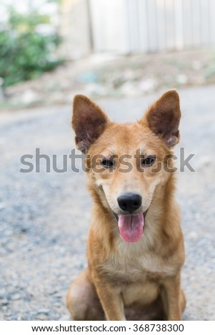 happy friendly dog on street and funny dog