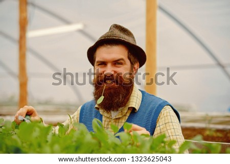 happy gardener man. gardener man with happy face. happy man gardener in greenhouse. happy gardener man planting in modern orangery