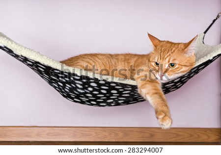 Happy ginger cat lying in a fur hammock