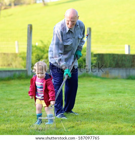 Happy grandfather, senior active man, working in the garden removing old grass together with his toddler granddaughter, adorable little child on a sunny day
