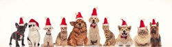 happy group of animals wearing santa claus hats are celbrating christmas together