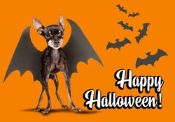 Happy halloween party invitation. Happy Halloween banner with orange background. Bats and dog with wings as symbols of holiday halloween. All Hallows 'Eve invitation to All Hallows' Eve.