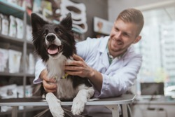 Happy healthy dog being examined by professional veterinarian, copy space. Cheerful handsome male vet doctor smiling at the dog after medical examination
