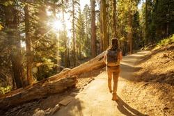 Happy hiker girl in Sequoia national park in California, USA