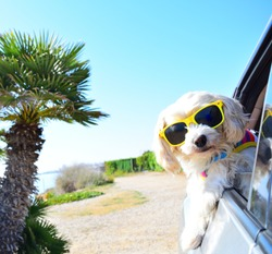happy holiday dog with sunglasses