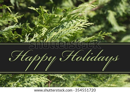 Happy Holidays Greeting, Evergreen Background and text Happy Holidays
