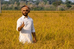 Happy Indian farmer showing thumb's up in beautiful golden paddy field
