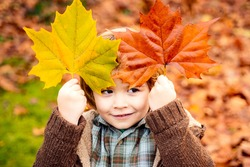 Happy kid, little boy, playing in beautiful autumn park on warm sunny fall day. Kids play with golden maple leaves