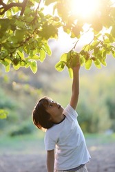 Happy kid outdoors in nature having good time picking the tree (retro style sunset time)