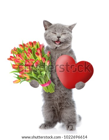 Happy kitten with a bouquet of tulips and heart. isolated on white background