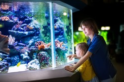 Happy laughing boy and his adorable toddler sister, cute little curly girl watching fishes in a tropical aquarium with coral reef wild life having fun together on a day trip to a modern city zoo