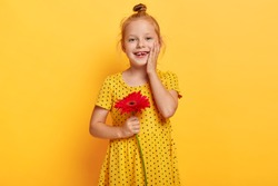 Happy little child with ginger hair bun, touches gently cheek, wears fashionable yellow polka dot dress, holds red gerbera, wants to give flower for her mommy, has cheerful expression. Bright colors