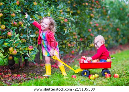 Happy little children, cute toddler girl and adorable funny baby boy, playing together in a beautiful fruit garden eating apples having fun on a wheel barrow ride enjoying a warm autumn day outdoors