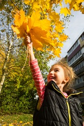 Happy little girl with a bouquet of yellow maple leaves in her hand is laughing and shouting against the background of autumn tree and a multi-storey building. Indian summer, leaf fall, back to school