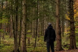 Happy Man Enjoy being Alone in The Green Pine Forest and Looking Deep in to the Woods Late Summer