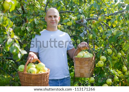 Happy man picking apples in the garden