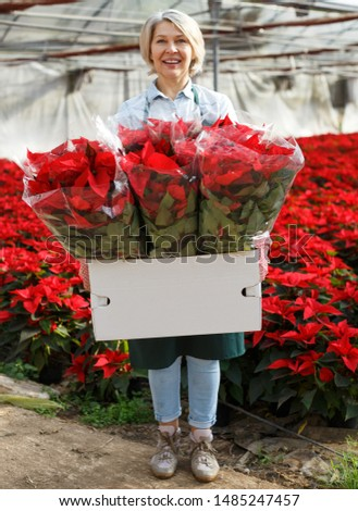 Happy middle-aged female standing with flowering Poinsettias in her greenhouse on background with red plantation