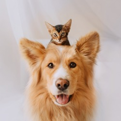 happy mixed breed dog portrait with a kitten on his head