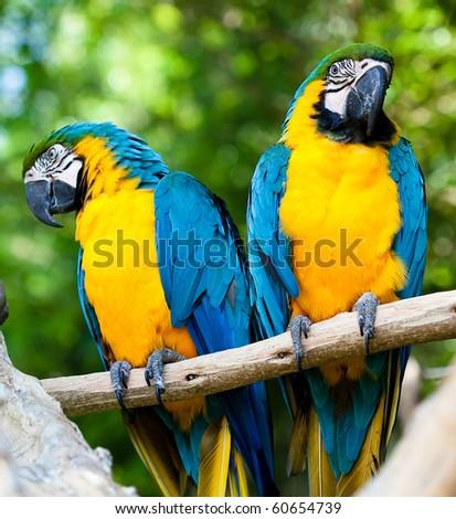 happy parrots