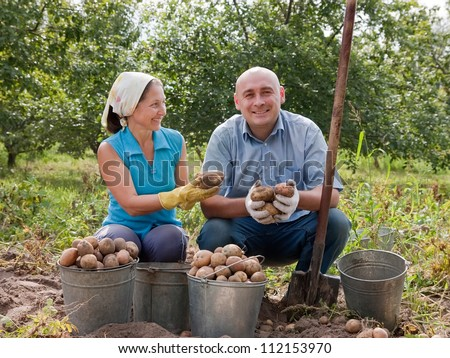 Happy people harvested potatoes in field
