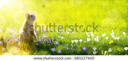 happy playing Cat on green spring  background
