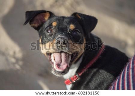 Happy puppy #602181158