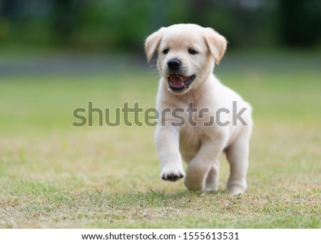 Photo of  Happy puppy dog running on playground green yard