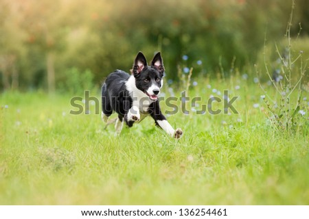 happy puppy running through a meadow