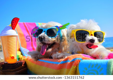 happy puppys with sunglasses  in the beach