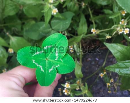 happy rare four-leaf clover leaf #1499224679