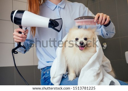happy redhaired ginger woman blowing dry the spitz dog hair wiping with a bath towel in the grooming salon.